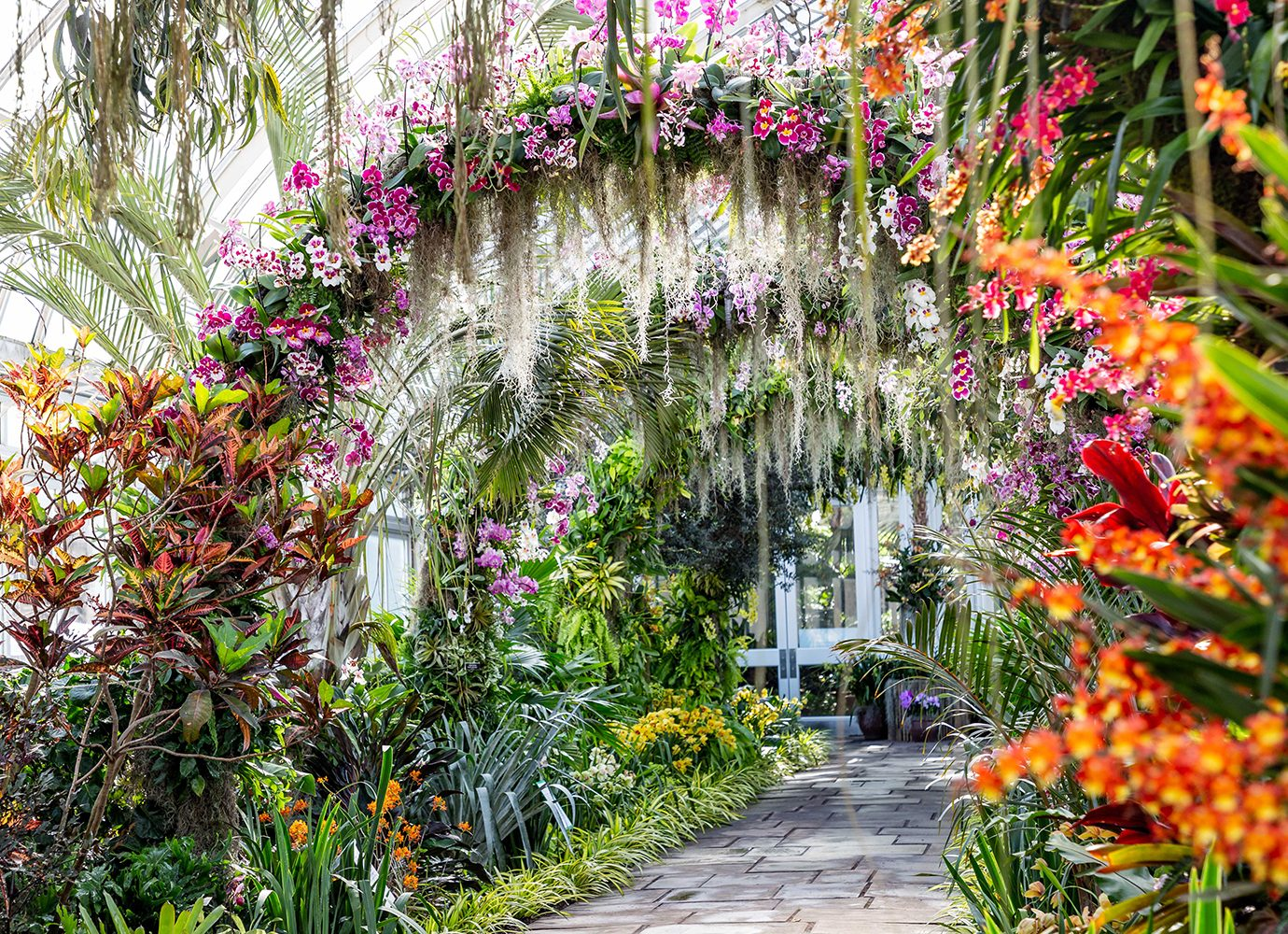 orchid show arches