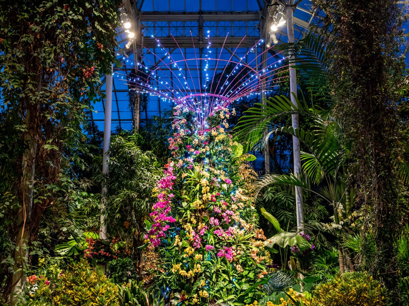 orchids inside greenhouse at night
