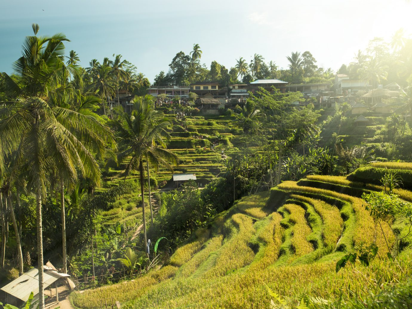 Beautiful rice terraces in the morning light near Tegallalang village, Ubud, Bali
