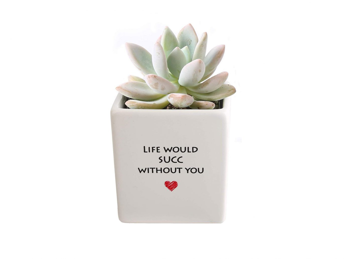 Roll over image to zoom in Costa Farms Live Mini Succulent
