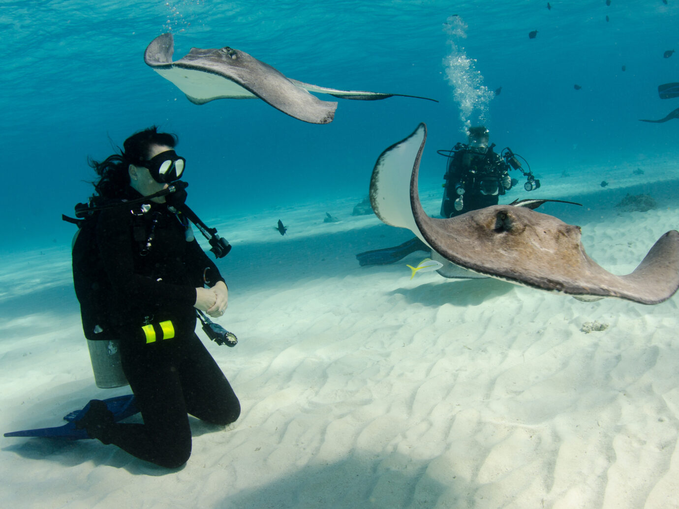Stringrays bypass this diver in search of the next diver with food. Grand Cayman.