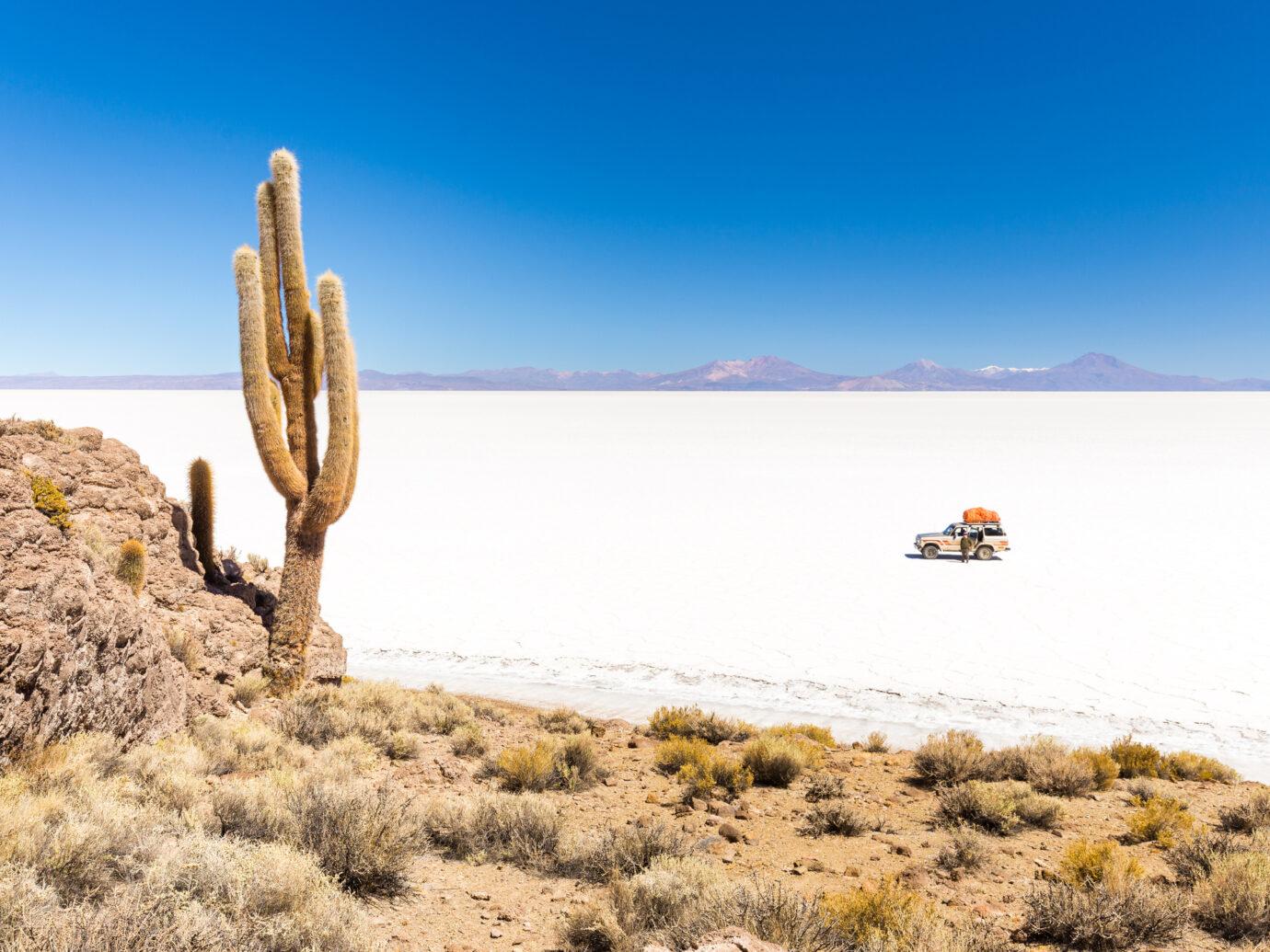 Huge cactus at Salar De Uyuni in Bolivia
