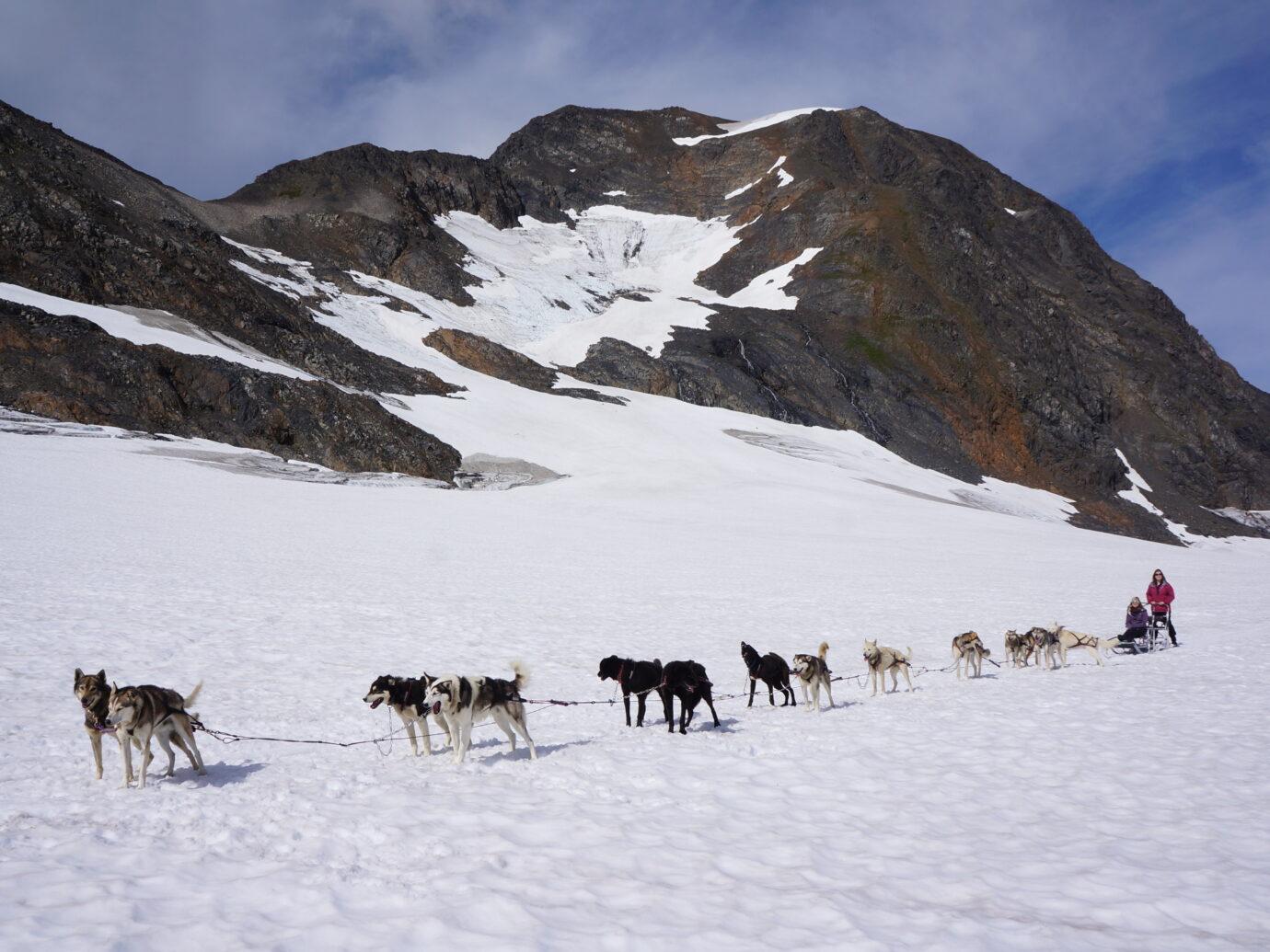 Glacier Dogsledding